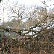 Platz 6 vom Wald aus am 13. Januar