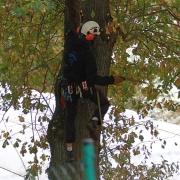 Ein Mann in den Bäumen . . .