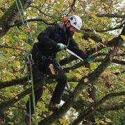 Den Bäumen zuliebe wurden diese nur behutsam ausgedünnt . . .